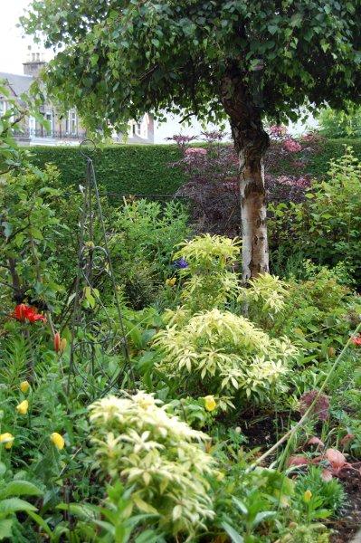 evolving front garden